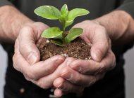 Ecología emocional… autogestión de las emociones para promover y propiciar un ambiente de paz y sostenibilidad