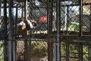 Tráfico de Animales - Fotos- Camille Rodríguez